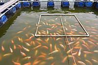 Водоемы для разведения и выращивания рыбы