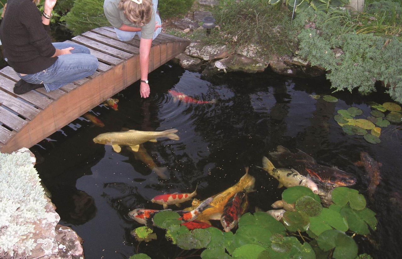 Зарыбление водоема. Разведение декоративной рыбы
