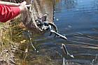 Зарыбление водоема. Разведение декоративной рыбы, фото 6