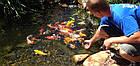 Пруды для карпов Кои, водоемы для рыбы, фото 4