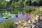 Эко-бассейны, биопруды, экопруды, фото 4
