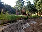 Посадка водных растений и прибережных растений, фото 3