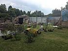 Посадка водных растений и прибережных растений, фото 4
