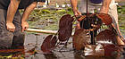 Посадка водных растений и прибережных растений, фото 5