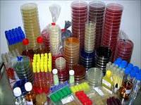 Среда № 1 (для выращивания бактерий)