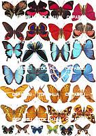 Бабочки 001