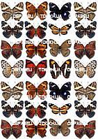 Бабочки 003