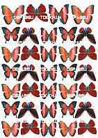 Бабочки 006