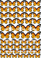 Бабочки 009