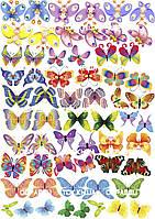 Бабочки 010