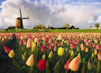 Календарь лета. Голландия