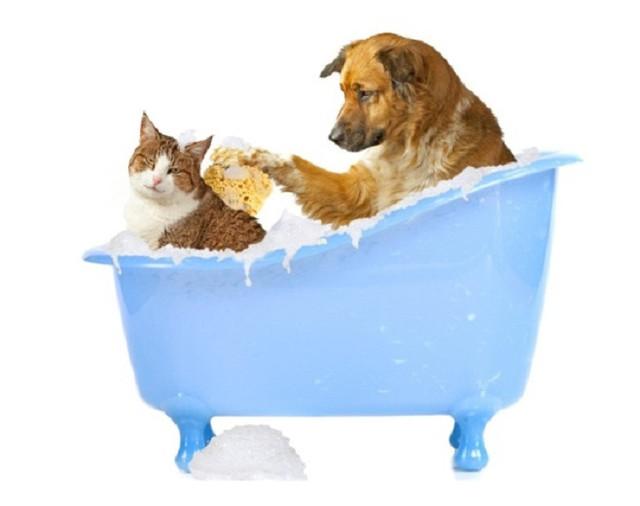Шампуни для животных