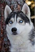 Светящиеся картины Startonight Волк Печать на Холсте Животные Декор стен Дизайн дома Интерьер