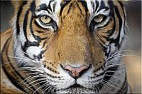 Светящиеся картины Startonight Тигр Печать на Холсте Животные Декор стен Дизайн дома Интерьер