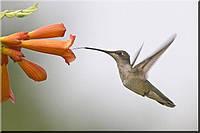 Светящиеся картины Startonight Колибри Птицы Печать на Холсте Животные Декор стен Дизайн дома Интерьер