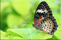 Светящиеся картины Startonight Бабочка Печать на Холсте Животные Декор стен Дизайн дома Интерьер