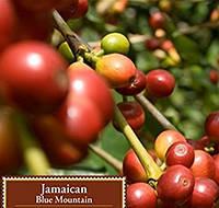 JAMAICA Gr.1 Blue Mountain