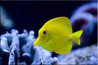 Светящиеся картины Startonight Экзотическая Рыба Печать на Холсте Животные Декор стен Дизайн дома Интерьер