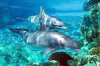 Светящиеся картины Startonight Дельфин Печать на Холсте Океан Море Животные Декор Дизайн Интерьер