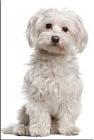 Светящиеся картины Startonight Собака Печать на Холсте Животные Декор стен Дизайн дома Интерьер