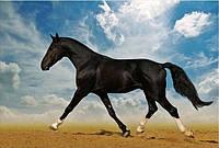 Светящиеся картины Startonight Черная Лошадь Печать на Холсте Животные Декор стен Дизайн дома Интерьер