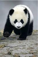 Светящиеся картины Startonight Медведь Панда Печать на Холсте Животные Декор стен Дизайн дома Интерьер