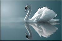 Светящиеся картины Startonight Белая Лебедь Печать на Холсте Животные Декор стен Дизайн дома Интерьер