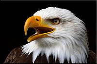 Светящиеся картины Startonight Американский Орел Птицы Печать на Холсте Животные Декор Дизайн Интерьер