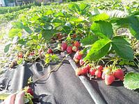 Особенности применения пленки и агроволокна при мульчировании почвы.