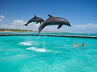 Купание с дельфинами. Dolphin