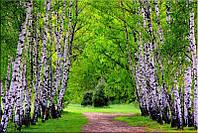 Светящиеся картины Startonight Березовый Лес Природа Пейзаж Печать на Холсте Декор стен Дизайн дома Интерьер