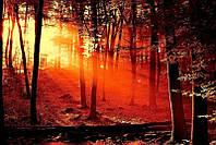 Светящиеся картины Startonight Красный Рассвет Природа Пейзаж Печать на Холсте Декор стен Дизайн дома Интерьер