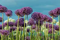 Светящиеся картины Startonight Полевые Цветы Природа Пейзаж Печать на Холсте Декор стен Дизайн дома Интерьер
