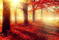 Светящиеся картины Startonight Красный Лес Природа Пейзаж Печать на Холсте Декор стен Дизайн дома Интерьер