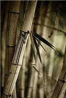 Светящиеся картины Startonight Луна Бамбук Лес Природа Пейзаж Печать на Холсте Декор стен Дизайн дома Интерьер