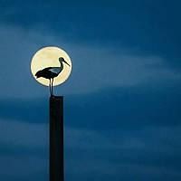 Светящиеся картины Startonight Аист Птица Природа Пейзаж Печать на Холсте Декор стен Дизайн