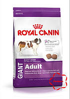 Royal canin ( Роял канін) сухий корм для собак гігантських порід віком від 18/24 місяців. 15 кг
