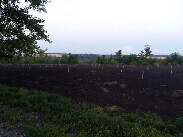В продаже фермерское хозяйство(ореховый сад) в Николаевской области, Первомайский район, село Синюхин Брод