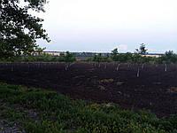 Ореховый сад в селе Синюхин Брод