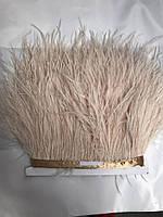 Перьевая тесьма из перьев страуса .Цвет темно бежевый.Цена за 0,5м