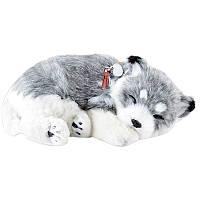 Дышащая игрушка мягкая Хаски Перфект Петс Perfect Petzzz