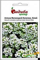 """Семена цветов Алиссум """"Пасхальная шляпа белая"""", однолетнее, 0,1 г, """"Pan American """",  Нидерланды"""