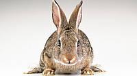 """Премикс для кроликов 2,5% с пробиотиком """"ШенМикс Раббит"""""""