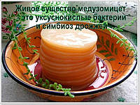 Чистая культура здоровый чайный гриб на 1л