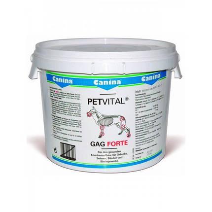 Глюкозамин PETVITAL GAG с экстрактом мидий, 600 таблеток, фото 2