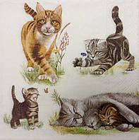 "Салфетка для декупажа ""коты"" (33*33 см.)"