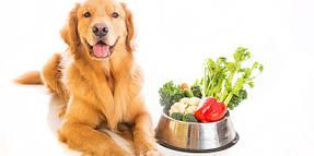 Витамины и пищевые добавки для собак