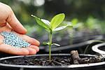 Импорт азотных удобрений из России увеличился