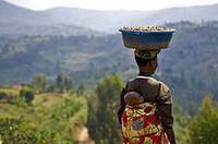 Выращивание кофе в Танзании.