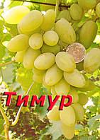 Саженцы винограда раннего срока созревания сорта Тимур розовый